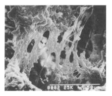 نحوه عملکرد پلیمرها در بتن و سایر فرآورده های سیمانی ( ملات ها)